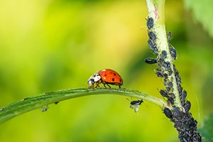 Tratamientos fitosanitarios